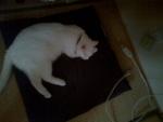 睡眠クーラー