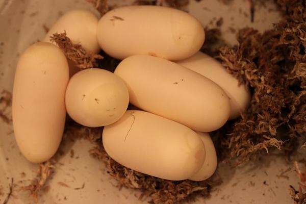 180620卵