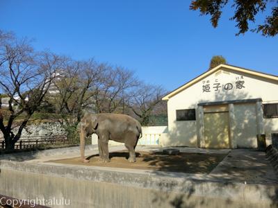 姫路市立動物園 アジアゾウ