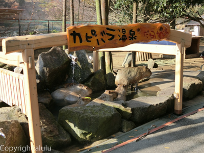 姫路セントラルパーク カピバラ温泉