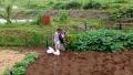 収穫法指南